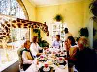 Giraffe_manor
